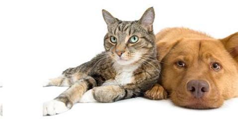ANIMAL SUPPLEMENTS